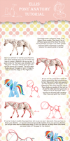 Pony Anatomy Tutorial by EllisArts