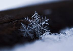Snowflake by mprox