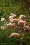 Flamingos by joanniegoulet