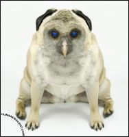 Blue eyed Owlog by HumanDescent