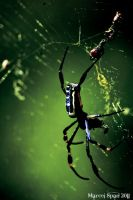 Spidery green by MJWallace