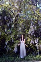 Wisteria by brittsperspective