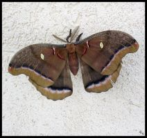 Moth by MillerTime30