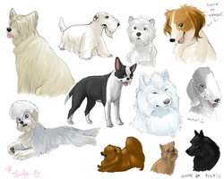 random doggies. by shelzie