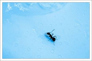 Ant In The Sink by comino69