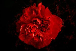 painting the carnation red by tea