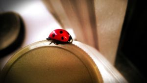 Lady Bug in Calgary by MattnMello