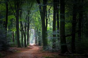Inviting path by erynlasgalenphotoart