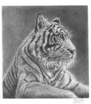 Tiger by GiovanniChis
