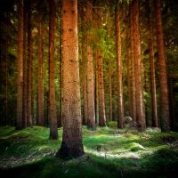 Summer Forest by PoLazarus2