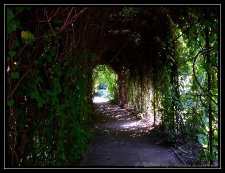 Plant Tunnel by TheBobson