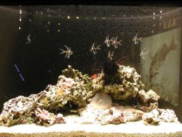 Aquarium Pic 12 by THX1138666