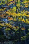 Yellow Leaves by amrodel