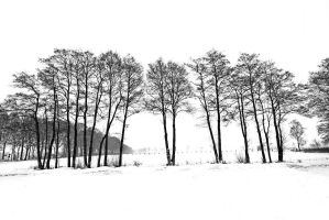 winter rigid by augenweide