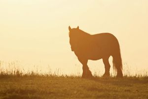 Horse in the sunset by xLeane
