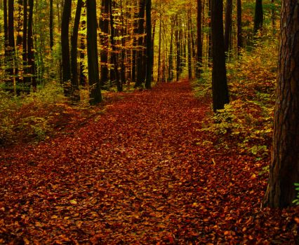 Wonderful Autumn II by Life-For-Sale