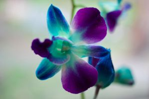 Purple Orchid Stock by CNStock