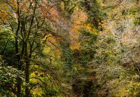 Woods at The Towers 4 by lornamacdonald