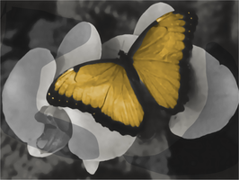 Yellow Butterfly by glasscandy