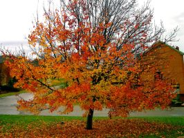 Fire Tree by RemnantMemory