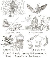 Invertebrate Adaptations by Scutigera