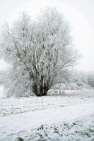winterland by priesteres-stock
