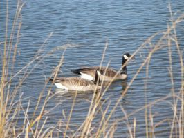 geese by Defeet