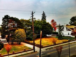 Fall Colors by nicktanski