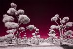 Infrared addict by shiinakiara25