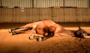 Free Dressage- Flat Lying by LuDa-Stock