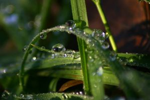 Droplets by Yanathrae