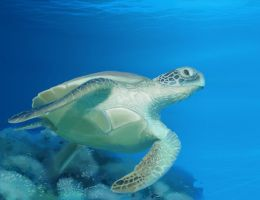 Sea turtle by cording44