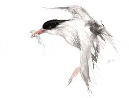 Sketch of a Tern. by JacobKihlgren