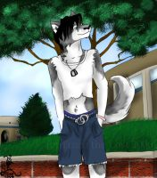 Husky Commision by Truro