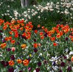 Impressionist Garden by PamplemousseCeil