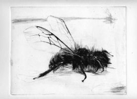 bee1 by givli