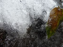 leaf in ice 3 by HellyMr