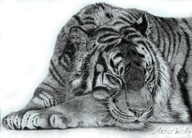 Sleeping tyger by ArtiaWolf
