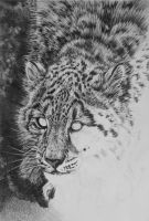 Snow Leopard - WIP by Face-Reality