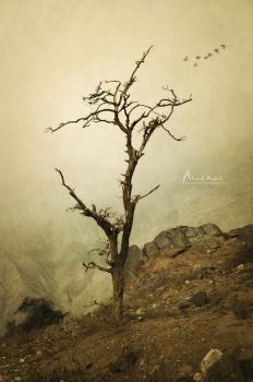 Tree by Ahmed-Matrix