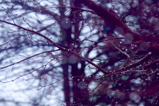 Droplets 2 by votra