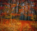Into the Autumn by FreeForms