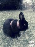 MY BUNNY 3 by she-rockslml8