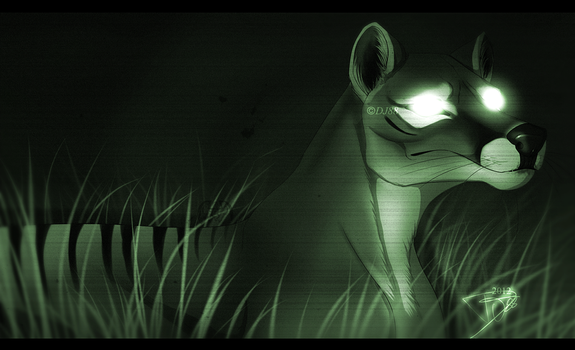 Thylacine NightCam 2 by DJ88