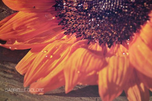 Sprinkled Sunflower by MsGabrielle