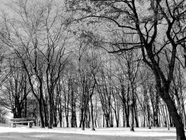 lost in the winter by piink-chamallow