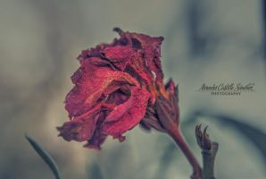 Wilted flower by MercedesCS