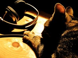 Cat attracted by the tunes by CHritzel