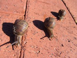the runaway snails by misscharlie