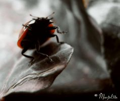 Ladybug Adventure I by marjol3in